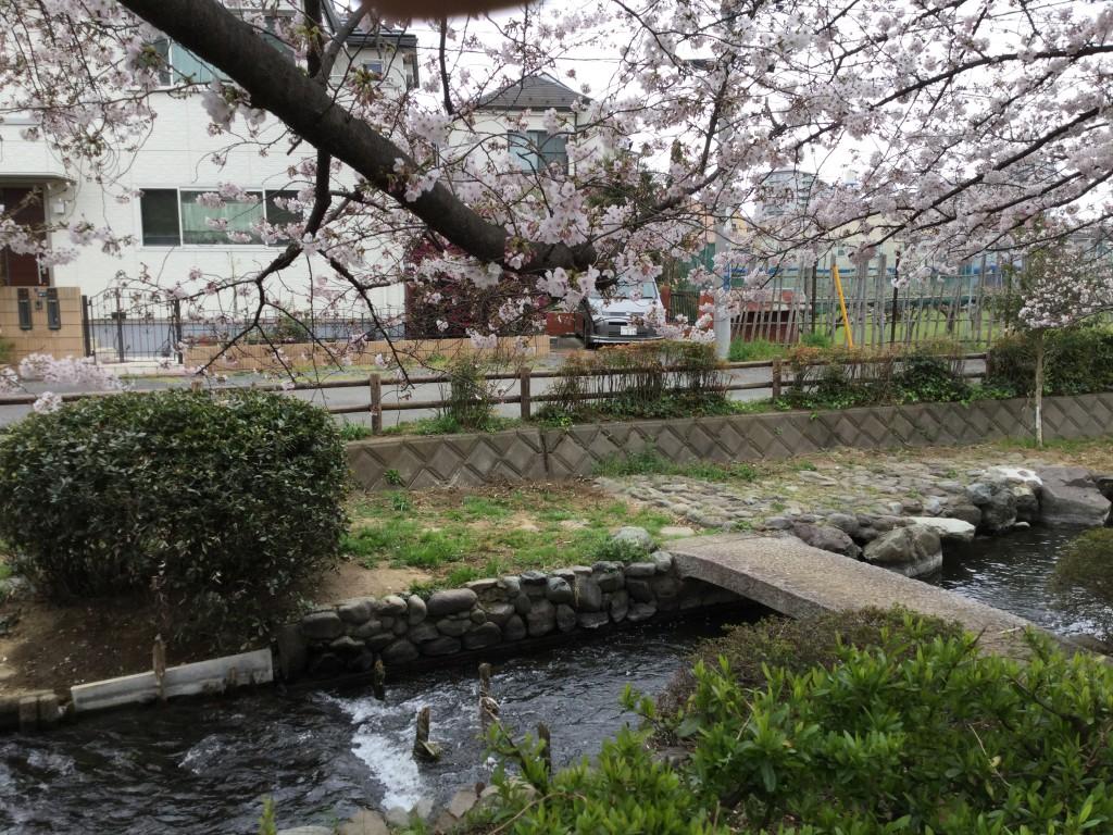 桜風景その1